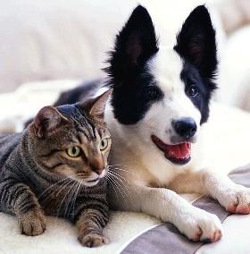 Keep Pets Warm