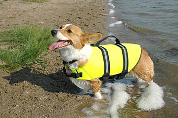 Dog-Life-Jacket