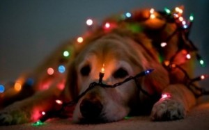 dog-in-christmas-lights-480x300