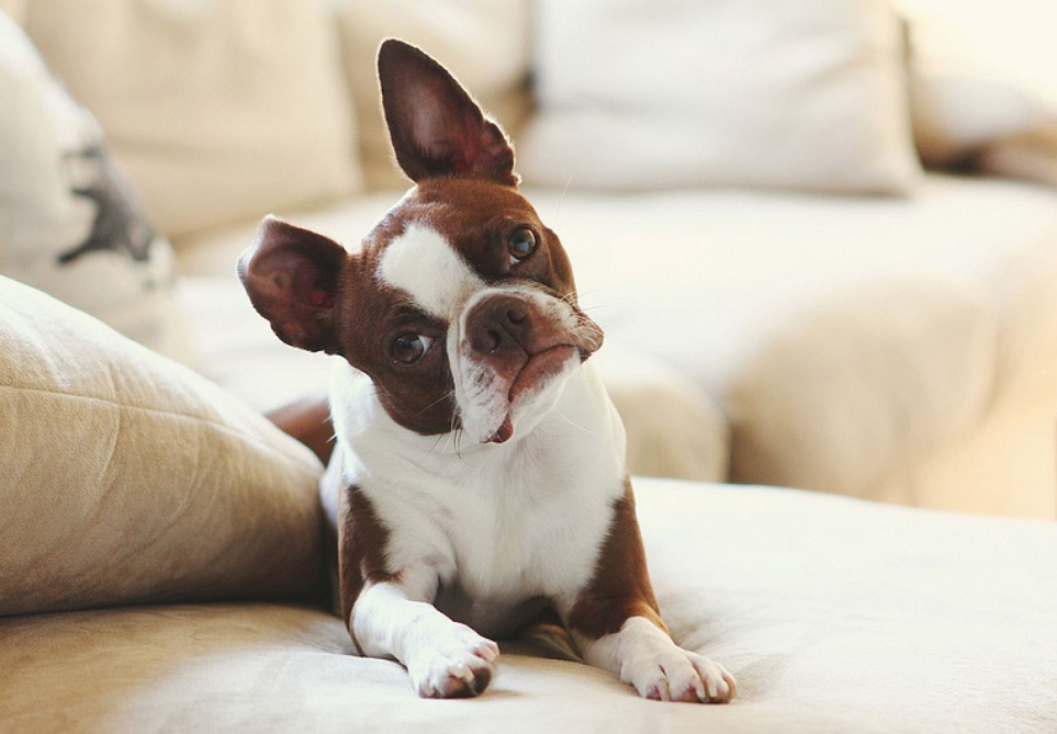 Tips For Preventing And Removing Pet Hair Buildup
