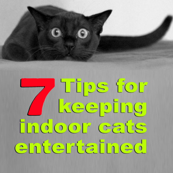 Keep Indoor Cats Entertained