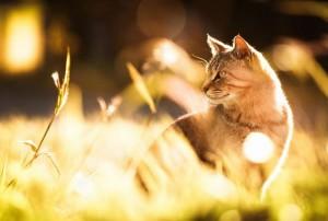cat sunlight heated pet bed