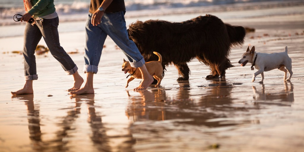 dogs_on_the_beach-1200x600