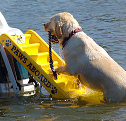 Buy Doggy Boat Ladder At Cozywinters