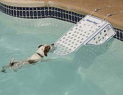 Diy Inground Pool >> Buy Skamper Ramp Pet Water Safety Ramp at CozyWinters