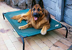 elevated dog bed the original coolaroo dog bed - Raised Dog Beds