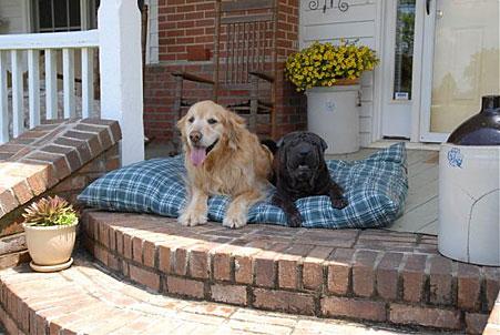 Indoor Outdoor Dog Bed | Waterproof Outdoor Dog Bed